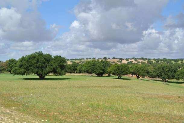 Essaouira argan plantacao