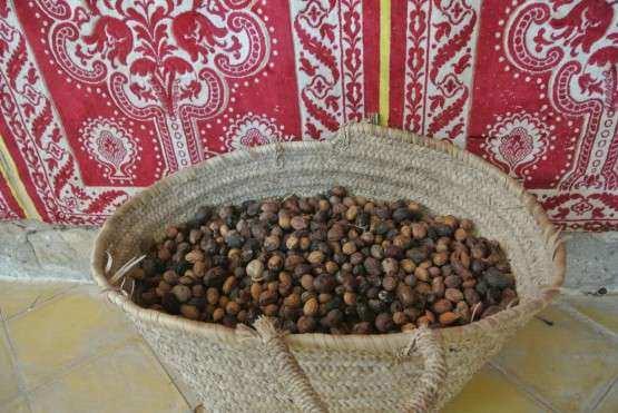 Essaouira argan sementes