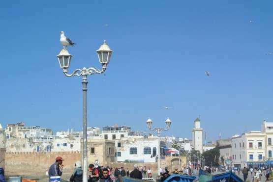 Essaouira linda gaivotas