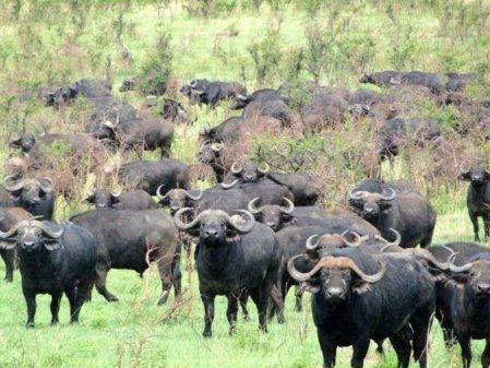 Safári na África - Um roteiro de luxo entre Quênia e Tanzânia