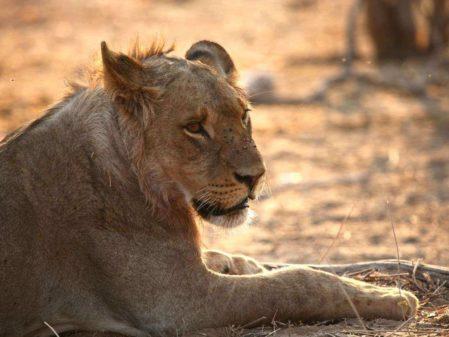 Botswana - Uma experiência incrível na África
