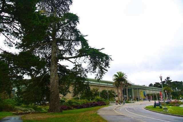 CA P Sao Francisco calif academy