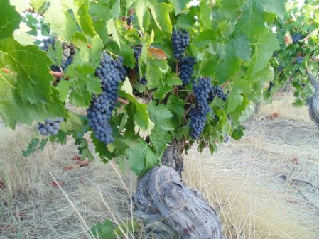 Hotel em vinícola no Chile e melhor época para viajar