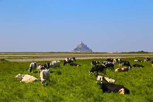 Normandia Mont P 4
