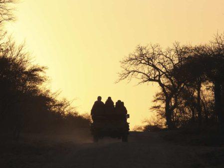 Safári África do Sul: dicas sobre os big 5, onde ficar e quando ir